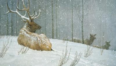 Evening Snowfall - American Elk