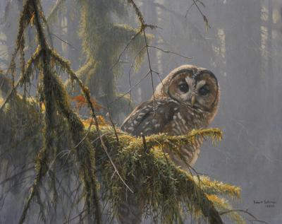 spotted owl essay james mccabe Interesting owl facts: size of the owl depends on the species smallest owl (elf owl) reaches weight of only one ounce and length of 5 inches largest owls.